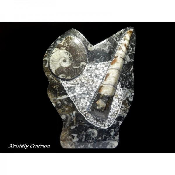 Ammonitesz-ortoceras kövületek