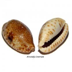 Csigák-Kagylók